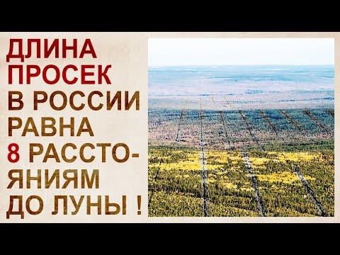 Тайна лесов сибири, скрывающая катастрофу 19 века
