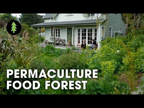 Visit a Beautiful 23 Year Forest Garden