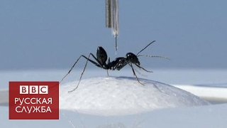 Как муравьи помогают ученым усовершенствовать навигацию роботов