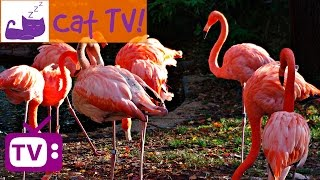 Cat TV - 30 min of Beautiful Flamingos Combined with Soothing Music Engaging Visuals For Cats Ep 8
