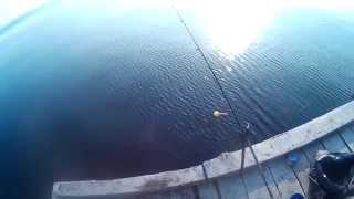 Рыбалка в никополе сом