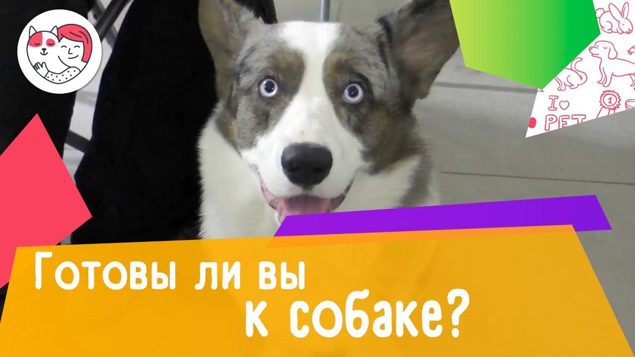 6 вопросов, которые нужно задать себе перед тем, как завести собаку