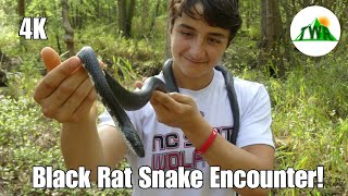 The Black Rat Snake: Everything You Need To Know! (4K)