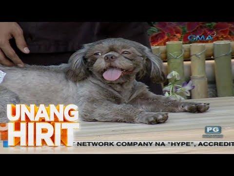 [GMA] Unang Hirit: Summer Pet Care