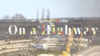 Animal Collective - On a Highway [Music Video]