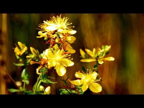 Wpływ pyłku potencji