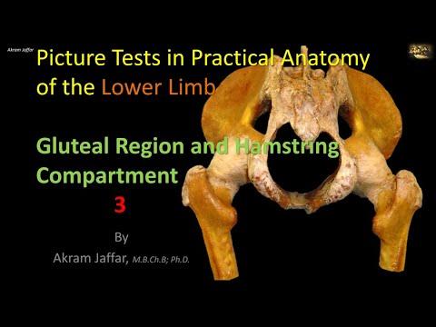 Test obrazkowy z anatomii kończyny dolnej - okolica pośladkowa i tylnej części uda 3