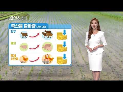 YTN 농업전망대(축산·감자 관측 9월) (2019.09.06) 이미지