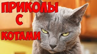 Приколы с Котами - Смешные коты и кошки 2018 | ПОПРОБУЙ НЕ ЗАСМЕЯТЬСЯ - Смешные коты