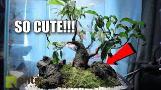 The Cutest Pet Ants In The World