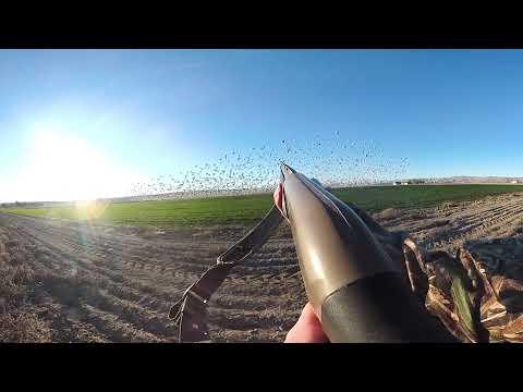 jump-shooting-snow-geese-in-vr
