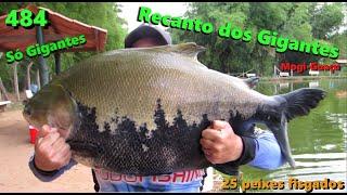 Os Tambaquis Gigantes, Pirararas e Baguás do Recanto dos Gigantes em Mogi - Fishingtur 484