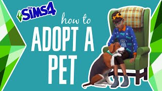 How to Adopt a Pet in The Sims 4 (Cats & Dogs) 🐶😸