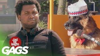 Just For Laughs Gags Dog Sells Hot Dogs