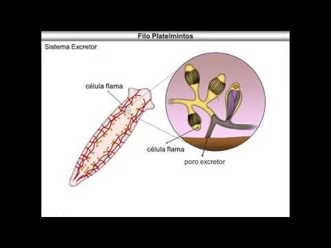 Bilateral preauricular papillomas nuchal cord