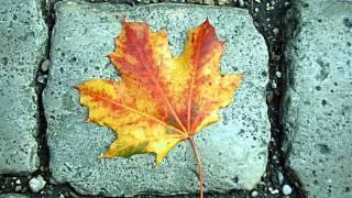 Doris Day - Autumn leaves