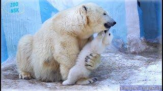 Мама Герда и медвежата