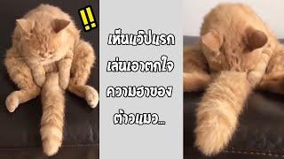 หนึ่งในรูปที่คุณต้องเซฟเก็บไว้ดู เห็นภาพนี้นึกถึงอะไรกัน!!... #รวมคลิปฮาพากย์ไทย