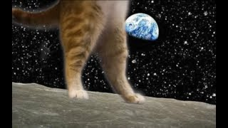 Keyboard Cat Short Film Lunar
