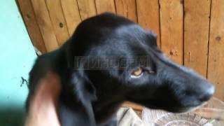простреленный насквозь пёс выжил