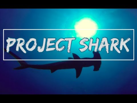 Project Shark on daedalus & St Johns Red Sea