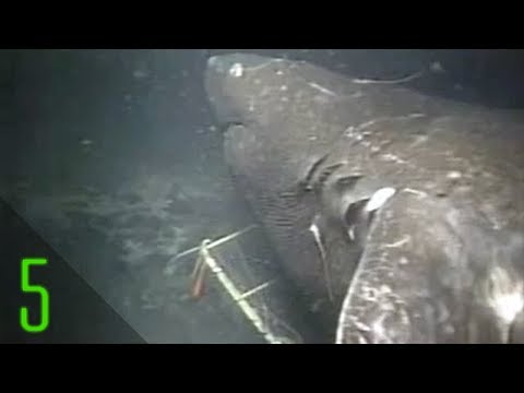 5 Deep Sea Anomalies Science Has Struggled to Explain