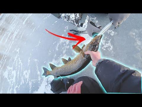 Ловля щуки по первому льду на флажки