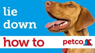 How to Train Your Dog to Lie Down (Petco)