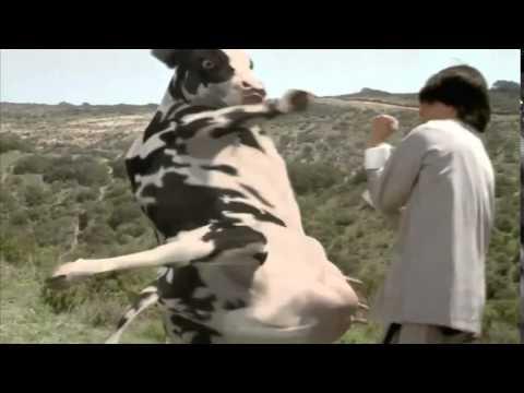Matrix Cow Fight