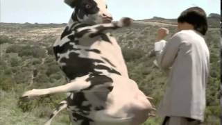 Download Video The Funny Man vs  Cow Fight (HQ) MP3 3GP MP4