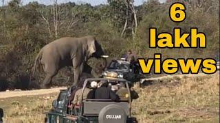Elephant attack & Tiger crossing Jhirna zone