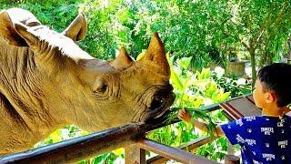 동물원 코뿔소 먹이주기 예준이의 동물체험 어린이 놀이터 코끼리 하마 Kids Zoo Animal Video for Kids