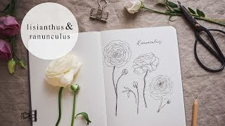 Botanical Illustration | Ranunculus + Lisianthus
