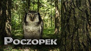 preview picture of video 'Silvarium-leśny ogród   2014r'