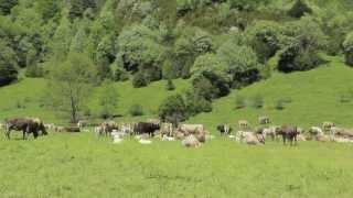 preview picture of video 'Ternera Valle de Broto, Porque Huesca tiene Magia'