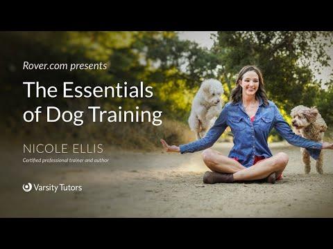 Rover.com Presents The Essentials of Dog Training - YouTube