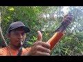 pikat burung Srigunting di dalam hutan lumayan memuaskan