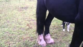 Dog bugging a horse