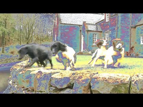 Fieldsports Britain – Drumlanrig Castle dogs and the search for pigeons, rabbits and deer