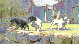 Fieldsports Britain – Drumlanrig Castle dogs + pigeons, rabbits and deer, episode 65