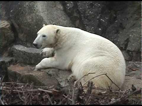 Berlin Zoo Knut - last day der letzte Tag