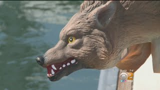 Plastic Coyotes Deployed To Ward Off Sea Lions At Newport Harbor