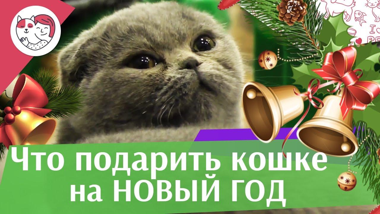 5 идей для подарка кошке на Новый год на ilikepet