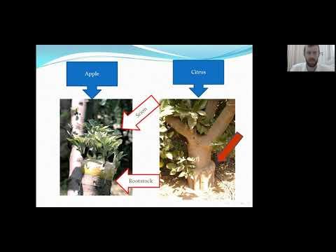 Filmed lectures –Kilei Ilan (Grafting)