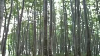 癒しの森林浴