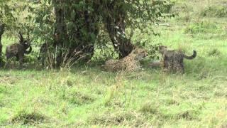 preview picture of video 'masai mara kenya hd 1parte.mp4'