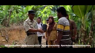 Penanaman Perdana Bantuan Bibit Kakao di Kabupaten Berau