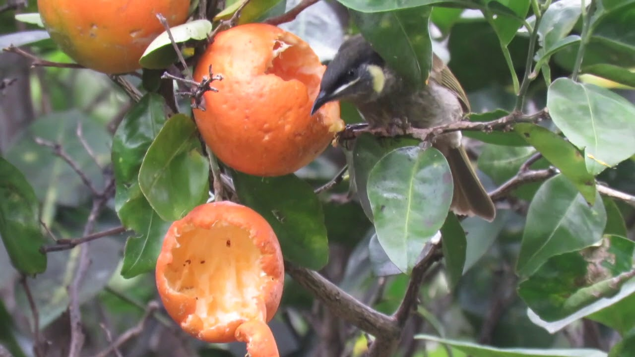 Citrus time of the year