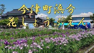 【びわ湖源流の郷・高島市より】今津町浜分の花しょうぶえん