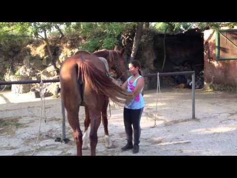 Dove in Tjumen per comprare lattivatore di cavallo